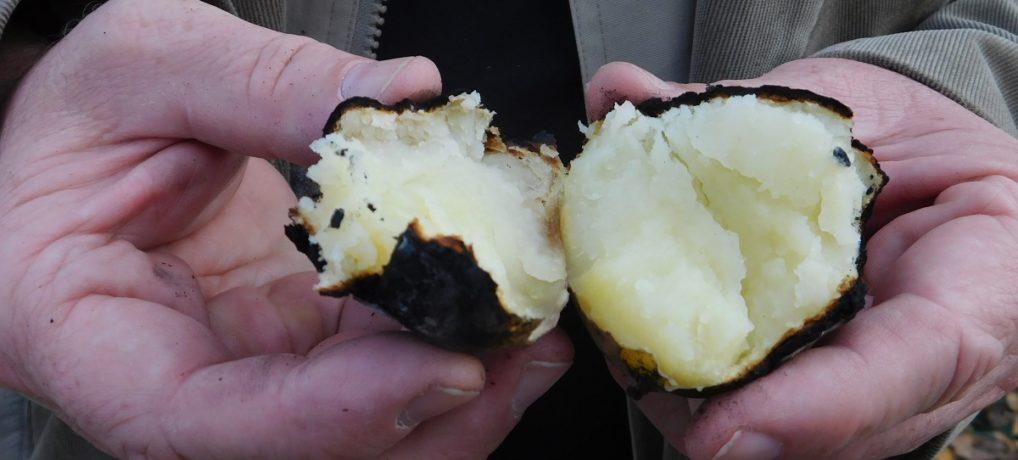 Dzień pieczonego ziemniaka